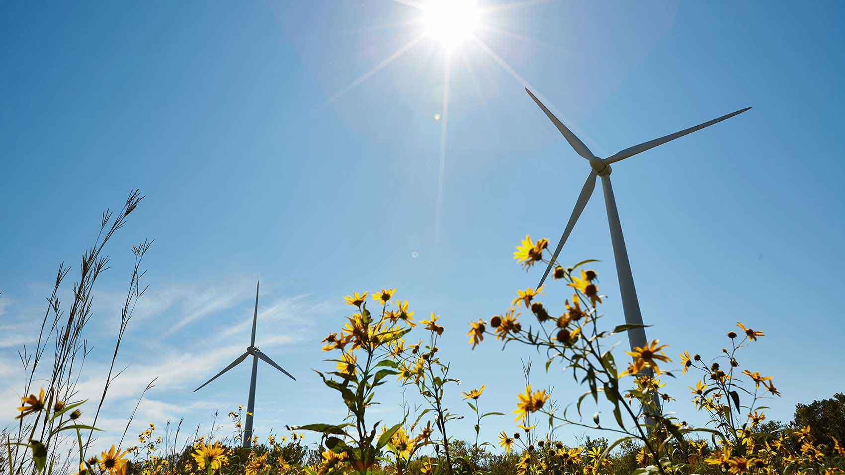 Renewable Wind Energy Powers SC Johnson