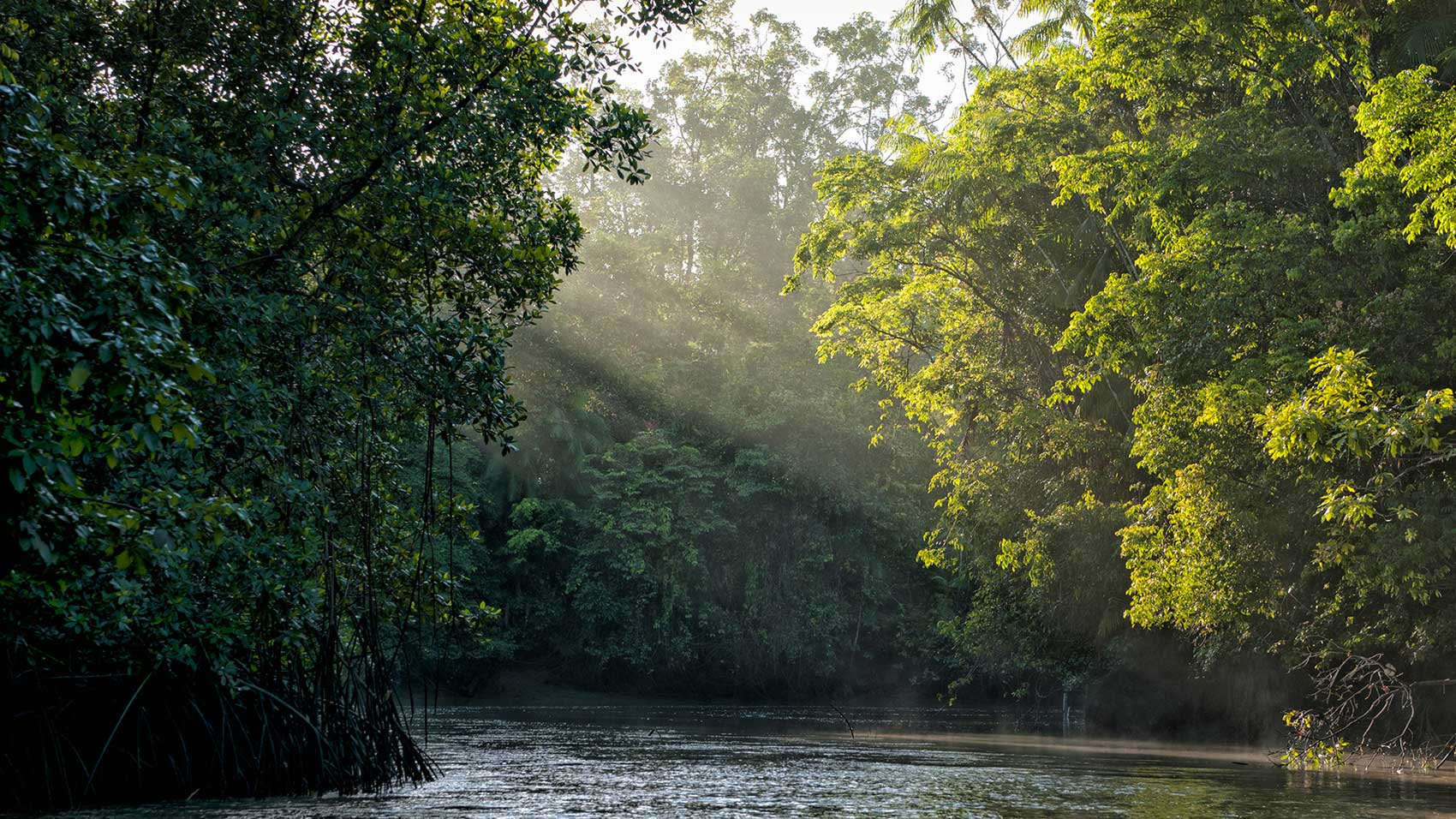 Conservation partners SC Johnson and Conservation International work to stop deforestation in the Amazon